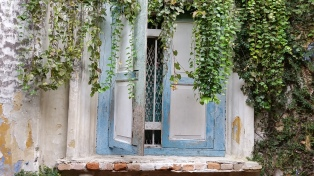 I love this window and the overhanging vine